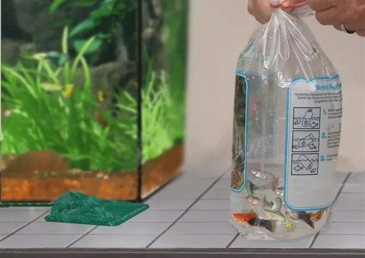 Как перевезти аквариум с рыбками, как перевозить аквариум при переезде, правила транспортировки аквариума в данной статье